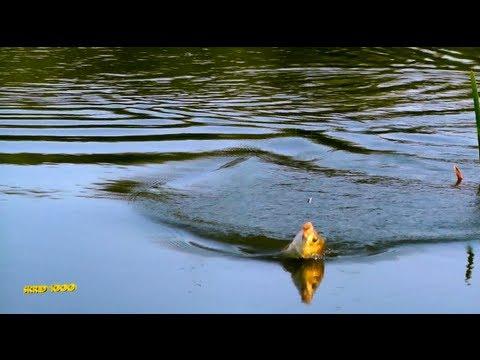 арзамас где ловить рыбу