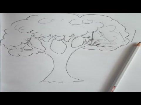 Ağaç çizimi Youtube