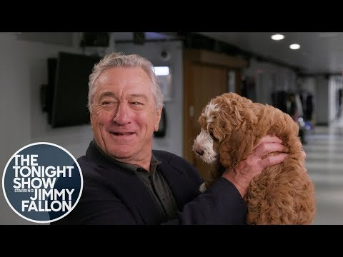 Robert De Niro Has Never Seen a Dog