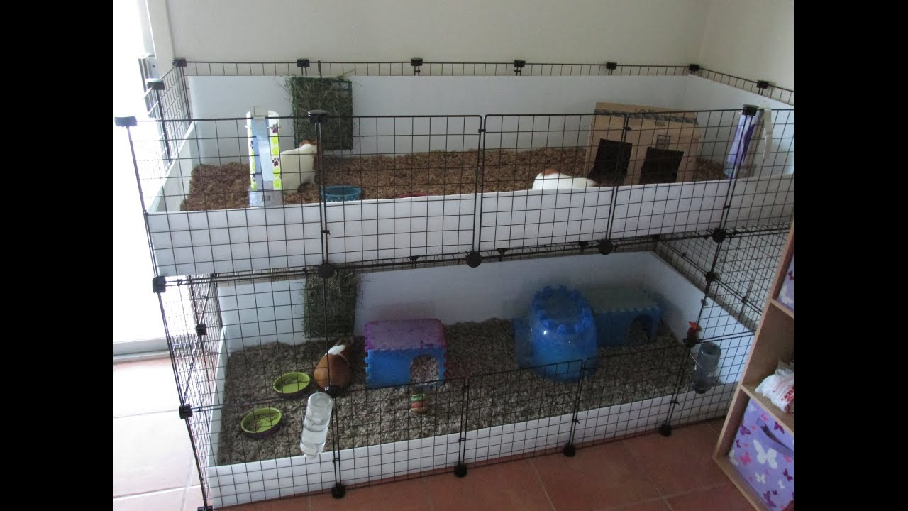 new c c cages and new guinea pigs youtube