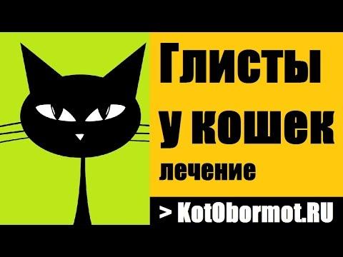 Описторхоз - Профилактика