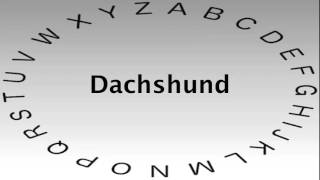 Spelling Bee Words And Definitions — Dachshund