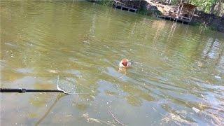 большая щука взяла на поплавочную удочку