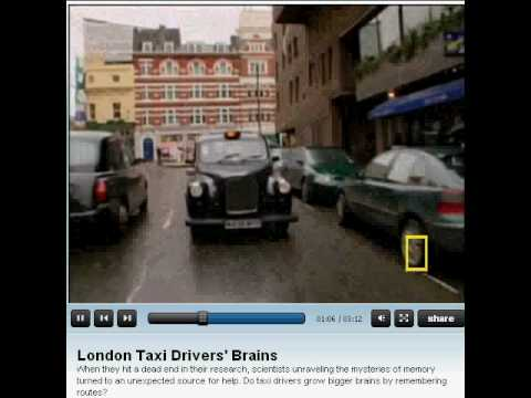 Taxi Driver's Brains