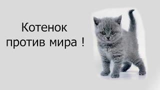 Котенок против мира !