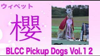 BLCC Pickup Dogs Vol.12 ウィペット 櫻 BLCC HP http://blcc.simdif.com/