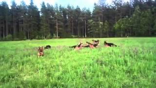 فتاة صغيرة  تلعب مع    14 كلب الماني