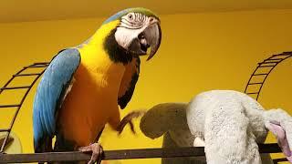 Попугай ара и мягкая игрушка