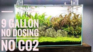 How To Create An Amazing Low Tech Aquascape | No CO2 No Dosing No Heater | Aquascaping