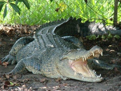 Johnstone River Croccodile Park - Innisfail Australia