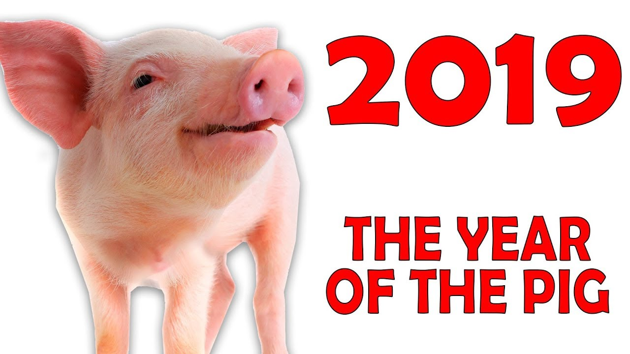 caaef2a09 The year of the PIG 2019: Chinese horoscope for the year 2019 - YouTube