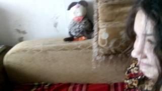 Челлендж - вызов принят!!! Укусила кошку за хвост! Жесть/