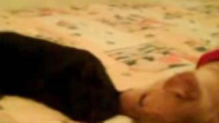 Perro Haciendo El Amor Con Gata Lo Nunca Vistoo