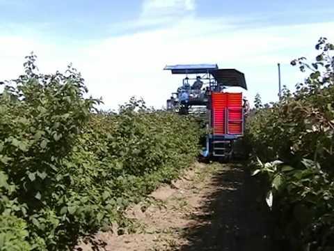 Korvan 9000 Berry Harvester