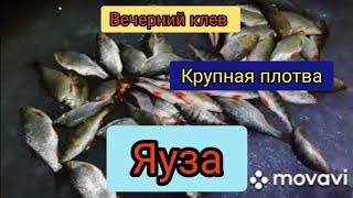 Рыбалка на яузском водохранилище с 3 по 4 января 2021 Хороший улов