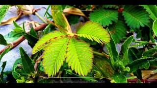 Medicine - Semalu.mp3