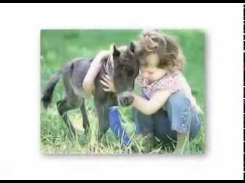 Pourquoi nous aimons les chiens, mangeons les cochons et portons les vaches(sous-titres français)