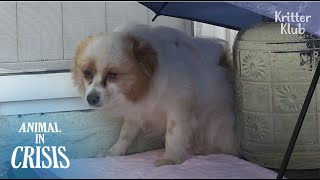 """You Said You'll Come Back If I Wait"" Dog Cries Feeling Betrayed.. (Part 1) 