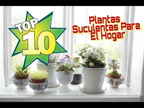 Top 10 plantas suculentas para el hogar youtube for Plantas decorativas para el hogar