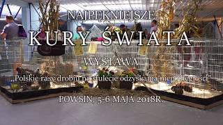Wystawa ,,Najpiękniejsze Kury Świata'' 2018r. Cz.1 Polskie rasy.