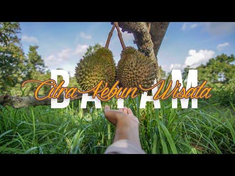 citra-kebun-wisata-batam,-wisata-kebun-durian-dan-mini-zoo-di-sei-lekop,-sagulung