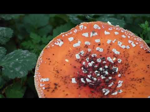 Nature in Unusual Places: Birmingham