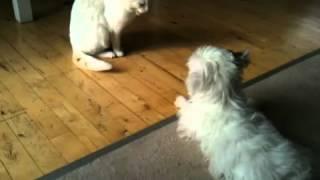 Havamalt puppy and house cat