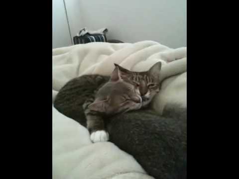 ヒゲをむしる猫