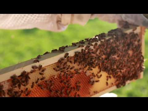 Black Beekeepers Are Transforming Detroit's Vacant Lots Into Bee Farms