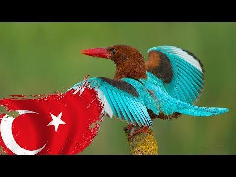 Türkiyede Yaşayan EN GÜZEL 10 Kuş Türü