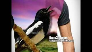 KAOS BURUNG - Kicau Mania - Kaos3D Gambar BURUNG