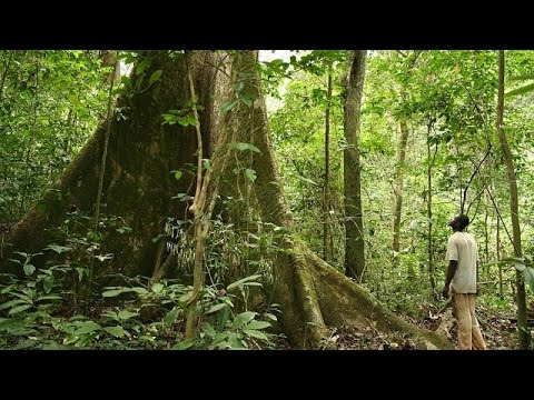 Gabon exploits natural resources through new zoning programme