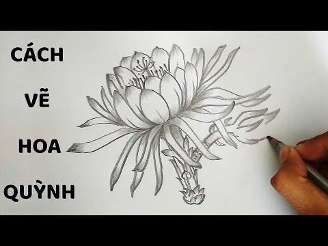 Vẽ Hoa Quỳnh bằng bút chì – How to draw Epiphyllum Flower