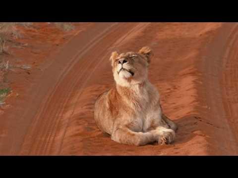 Tswalu Kalahari - South Africa
