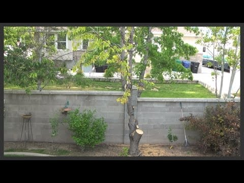 Tree Fertilizer Tail 2 Trying To Save The Cherry Part Five