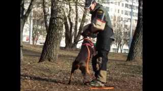Н. Федоринчик и Нирвана Дар Фэльвен, тренинг по защите 20 03 15