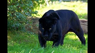 Животные мира Их мысли Нрав Характер Поведение Непредсказуемость Факты События Реальные кадры