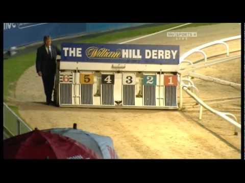 Greyhound Derby Final 2010