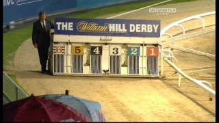 Greyhound Derby Final 2010