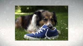 Important Dog Obedience Tips So You Can Learn How To Train Your Puppy Correctly!
