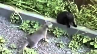 BEST FUNNY VIDEO FAIL ANIMALS 2014