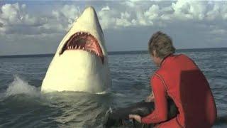 The Last Jaws (1981)  Full Movie