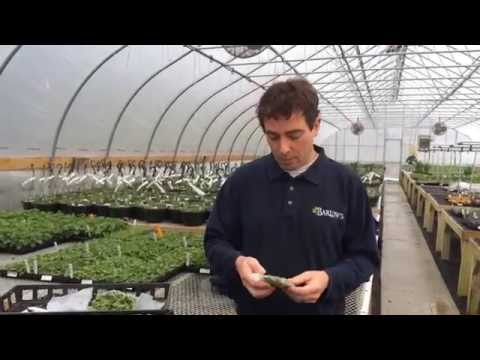 Barlow's TV Episode 38 Winter In the Greenhouse with Stephen Barlow