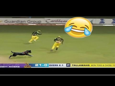 cricket funny videos 2016- must watch funny moments in cricket !
