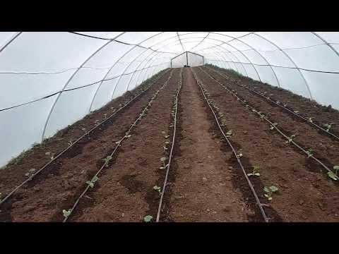 Выращивание кабачков в теплице и под пльонку разница 12 апреля 2018 г.