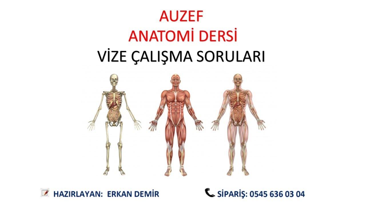 AUZEF 8.12.2018 Anatomi Vize Soru ve Cevapları