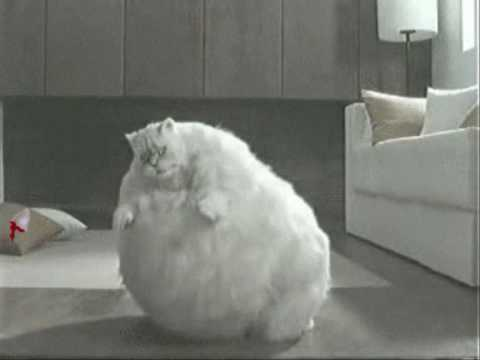 worlds fattest cat youtube