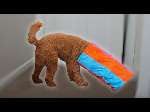My Dog Reviews Cat Toys