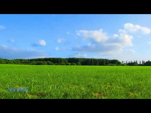 Secret Garden - Greenwaves mp3