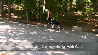 "2yo Blind German Shepherd ""kayla"" Before And After Video Amazing - Raleigh Durham Dog Training"